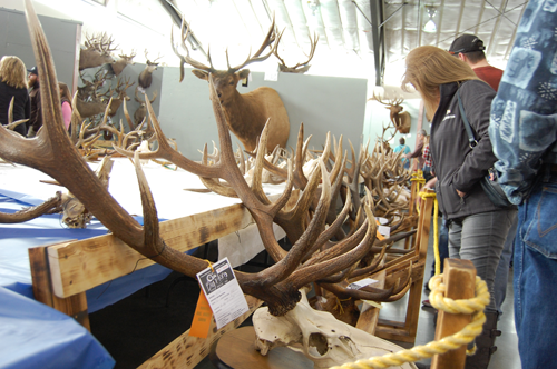Big Horn Show Trophy Competition